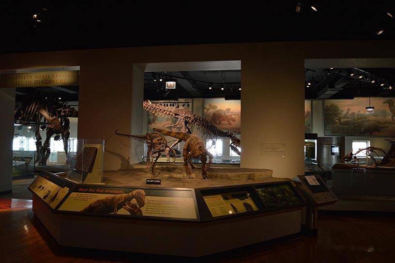 Chicago Field Museum dinosaures