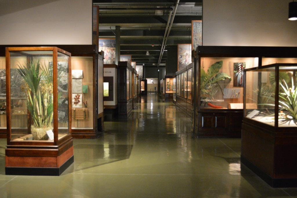 Section des plantes - Field Museum